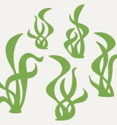 seaweed [ 1000 x 1000 Pixel ]