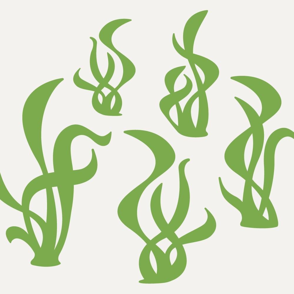 hight resolution of seaweed