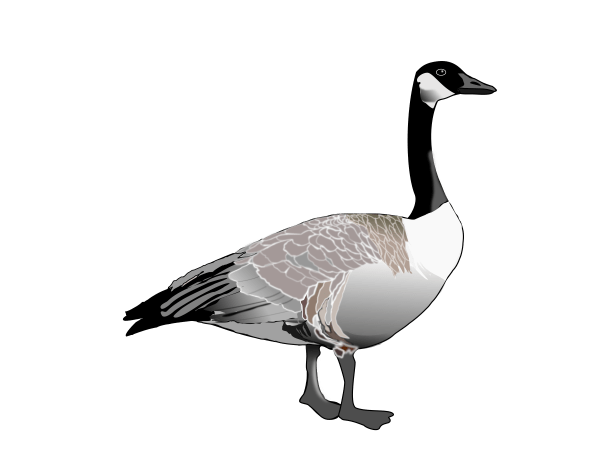 free goose cliparts