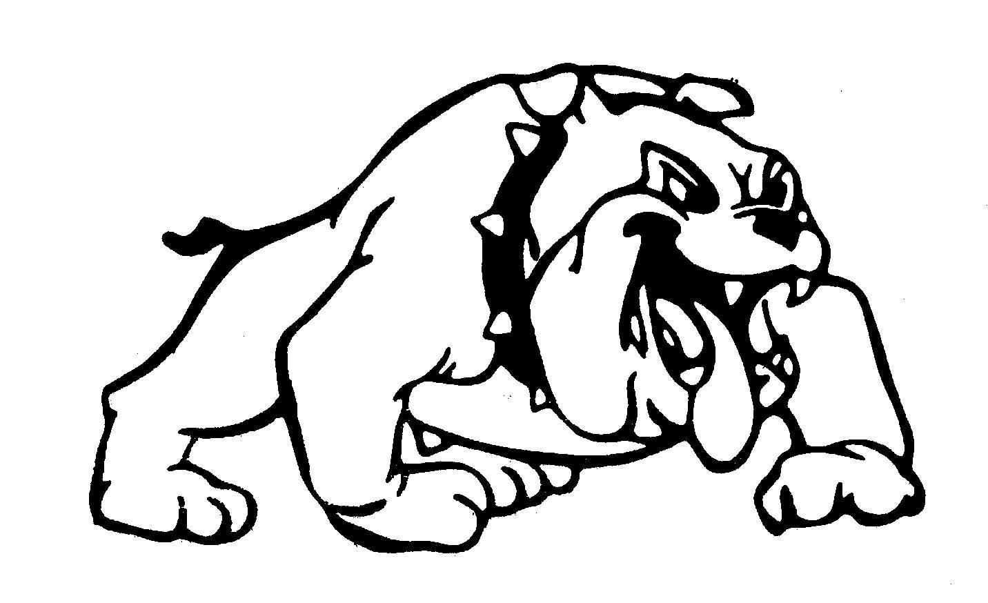 hight resolution of bulldog