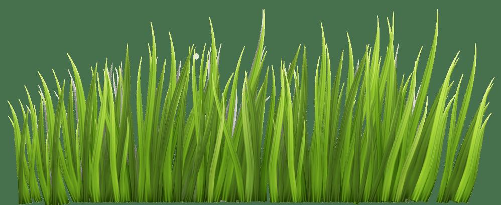 medium resolution of grass clip art free