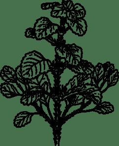 free alfalfa cliparts