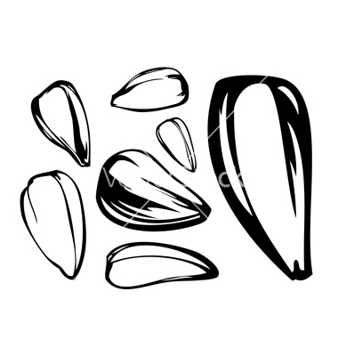 Free Seed Cliparts, Download Free Clip Art, Free Clip Art on Clipart Library