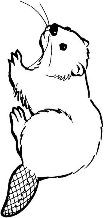 Free Beaver Cliparts, Download Free Clip Art, Free Clip