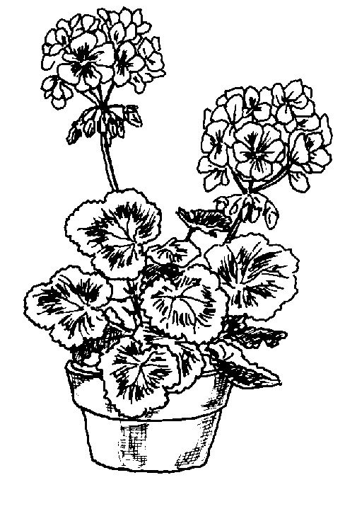 Free Geraniums Cliparts Download Free Clip Art Free Clip Art On
