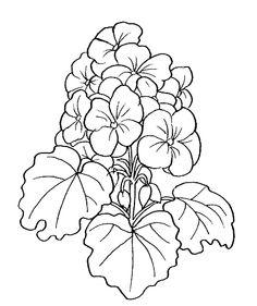 Free Geraniums Cliparts, Download Free Clip Art, Free Clip