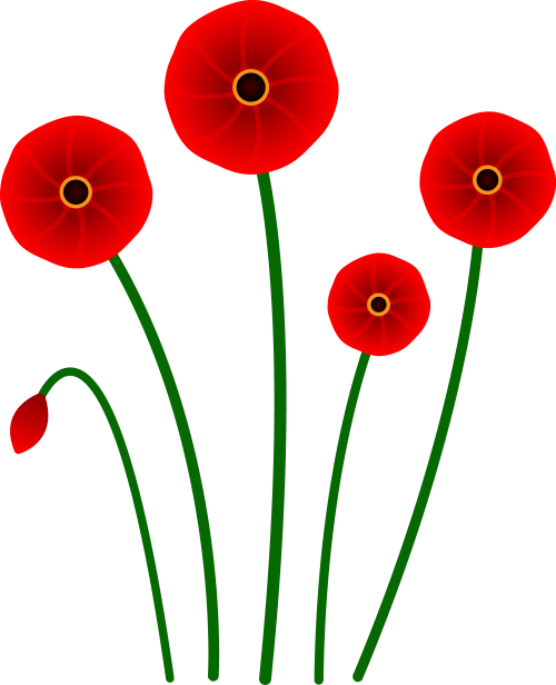 small resolution of red poppy flowers