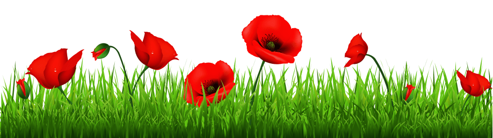 medium resolution of grass with beautiful poppies png clipart