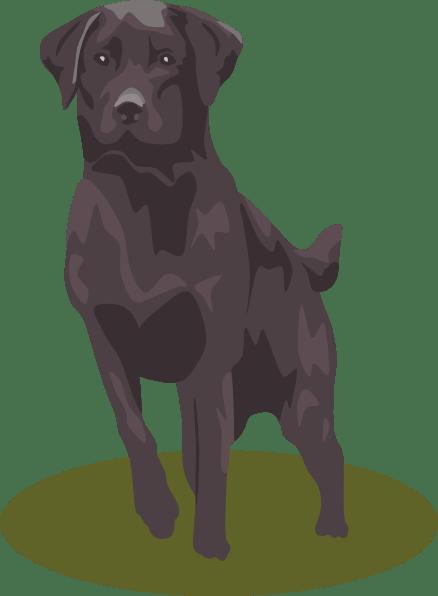 Chocolate Lab Cartoon : chocolate, cartoon, Labrador, Cliparts,, Download, Clipart, Library