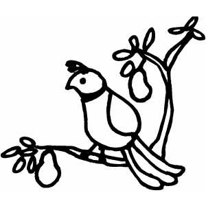 Free Mockingbird Cliparts, Download Free Clip Art, Free