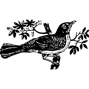 Free Mockingbird Cliparts, Download Free Clip Art, Free