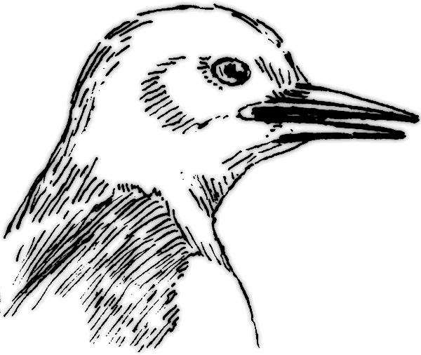 Free Beak Cliparts, Download Free Clip Art, Free Clip Art