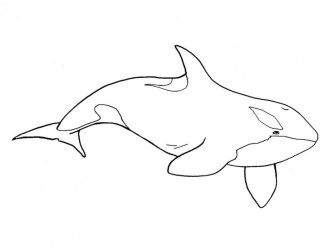 Free Orca Clipart Black And White Download Free Clip Art Free Clip Art on Clipart Library