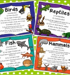 classification of animals for grade 2 - Clip Art Library [ 1236 x 1600 Pixel ]