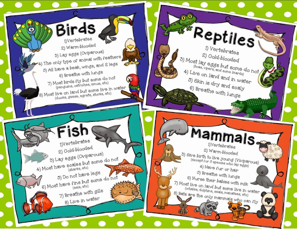 medium resolution of classification of animals for grade 2 - Clip Art Library