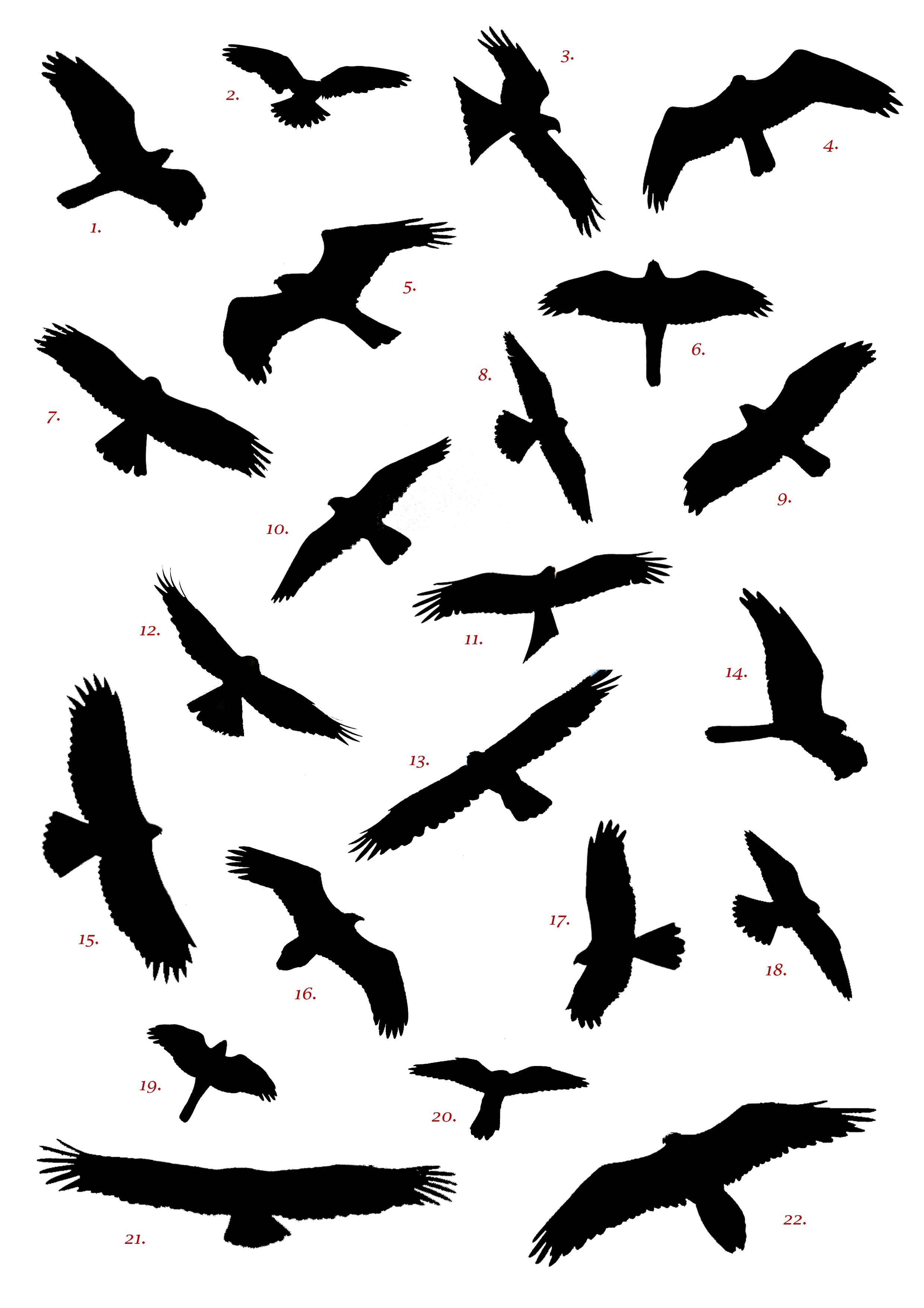 Free Raptor Cliparts Download Free Clip Art Free Clip