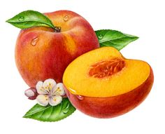 free peaches cliparts