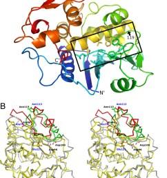 ribosome diagram [ 956 x 1280 Pixel ]