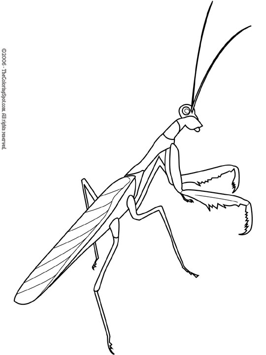 Free Mantis Cliparts, Download Free Clip Art, Free Clip
