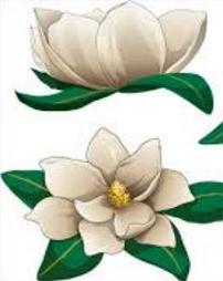 Magnolia Flower Clip Art Black And White