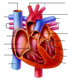 heart diagram unlabeled [ 1024 x 768 Pixel ]