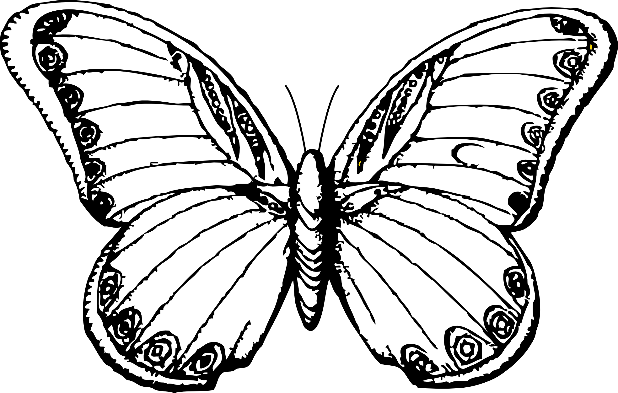 Free Butterfly Sketch Cliparts, Download Free Clip Art