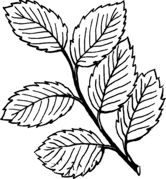 Free Cliparts Planting Plan, Download Free Clip Art, Free