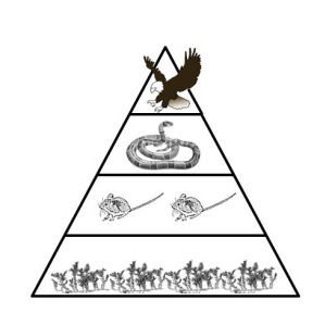 Free Energy Pyramid Cliparts, Download Free Clip Art, Free