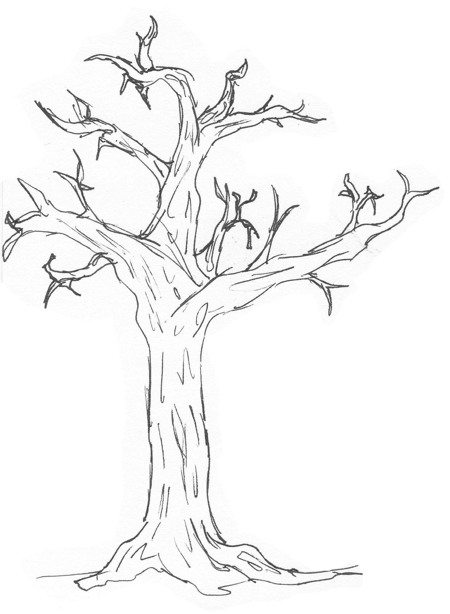 Free Simple Tree Drawings Download Free Clip Art Free