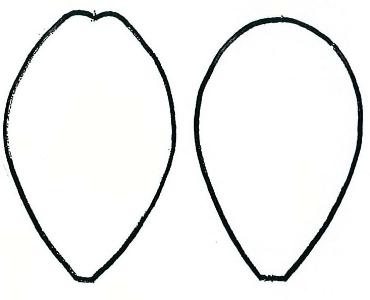 Free Petal Outline, Download Free Clip Art, Free Clip Art