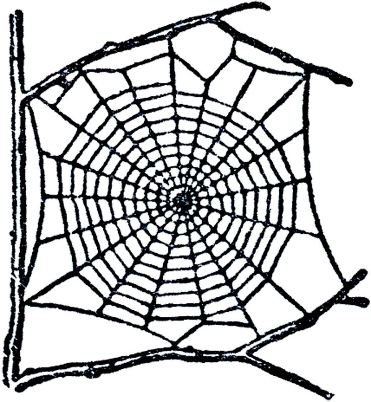 Free Spider Web Images Free, Download Free Clip Art, Free