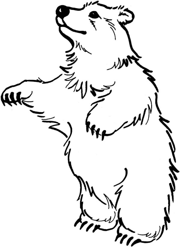 Free Pictures Of Bears Standing Up, Download Free Clip Art