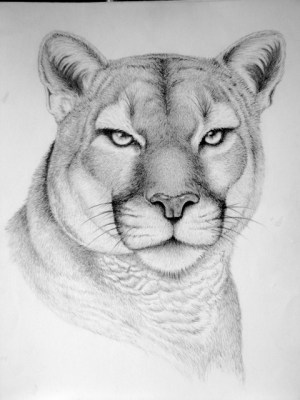 animal drawings pencil wild animals drawing horse sketches draw realistic easy faces behance wildlife clipart sketching google charcoal cool horses