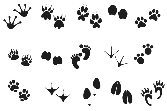 Free Animal Footprints, Download Free Clip Art, Free Clip
