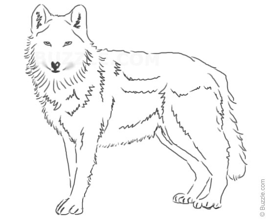 Free Easy Wolf Drawings, Download Free Clip Art, Free Clip