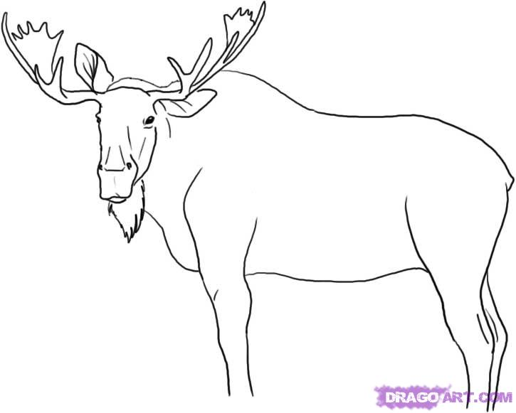 How to Draw a Moose, Step by Step, forest animals, Animals