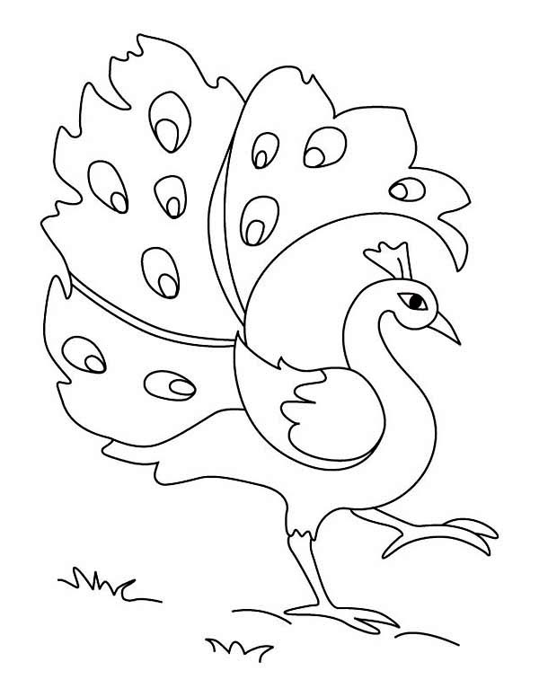 Free Simple Colorful Peacock Drawing, Download Free Clip