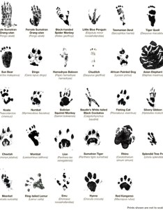 Animal tracks group totem talk also free paw prints download clip art on rh clipart library