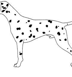 breed standard [ 1360 x 992 Pixel ]