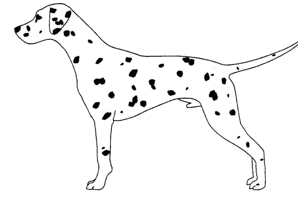 medium resolution of breed standard