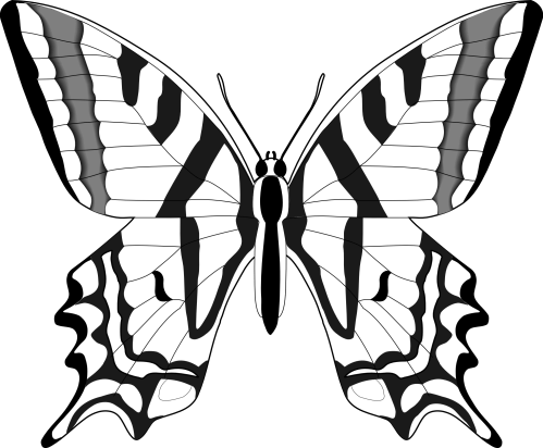 small resolution of butterfly 55 black white line art svg clipart library clipart library