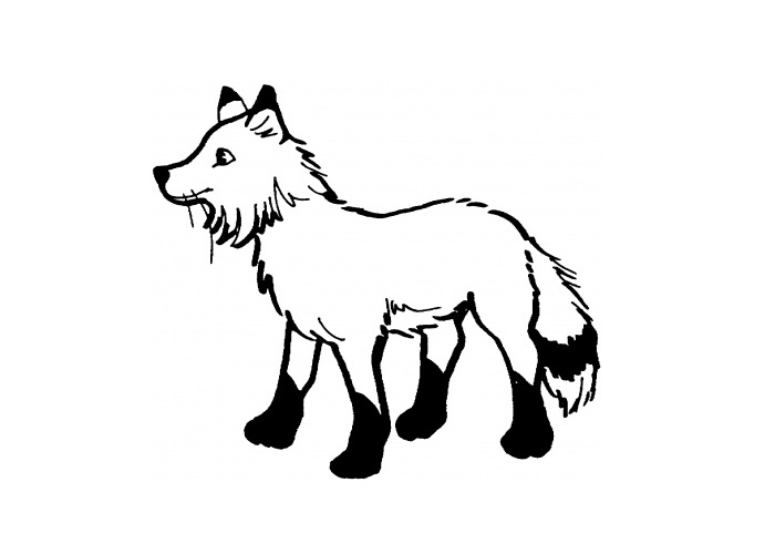Animal Coloring Fox Coloring Pages Raccoon Coloring Pages