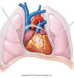 human heart diagram unlabeled anatomy human anatomy and physiology ii [ 1344 x 868 Pixel ]