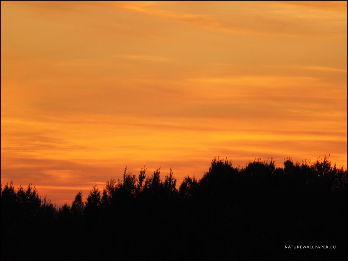 X864 Wallpaper Orange Sky With A Forest Silhouette