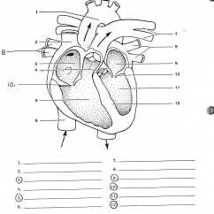 Heart Anatomy Diagram Worksheet Rv Electrical Plug Wiring Free Blank Download Clip Art