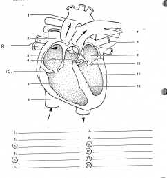 heart anatomy worksheet hd photos gallery human leg muscle anatomy human anatomy diagram [ 2400 x 3156 Pixel ]