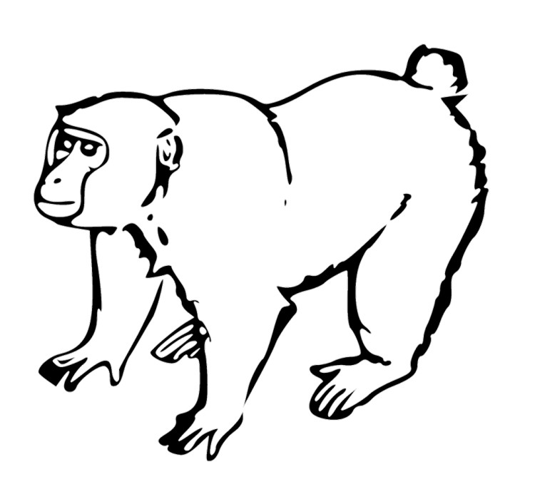 Free Hanging Monkey Picture, Download Free Clip Art, Free