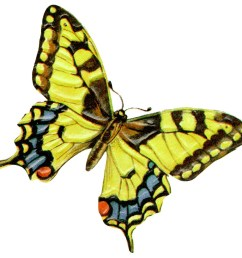 yellow butterfly clipart clipart library free clipart images [ 918 x 874 Pixel ]