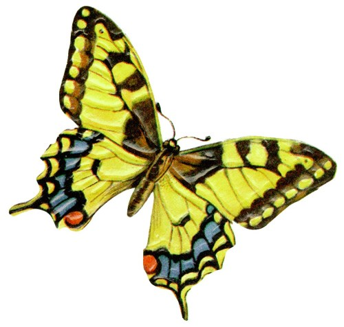 small resolution of yellow butterfly clipart clipart library free clipart images