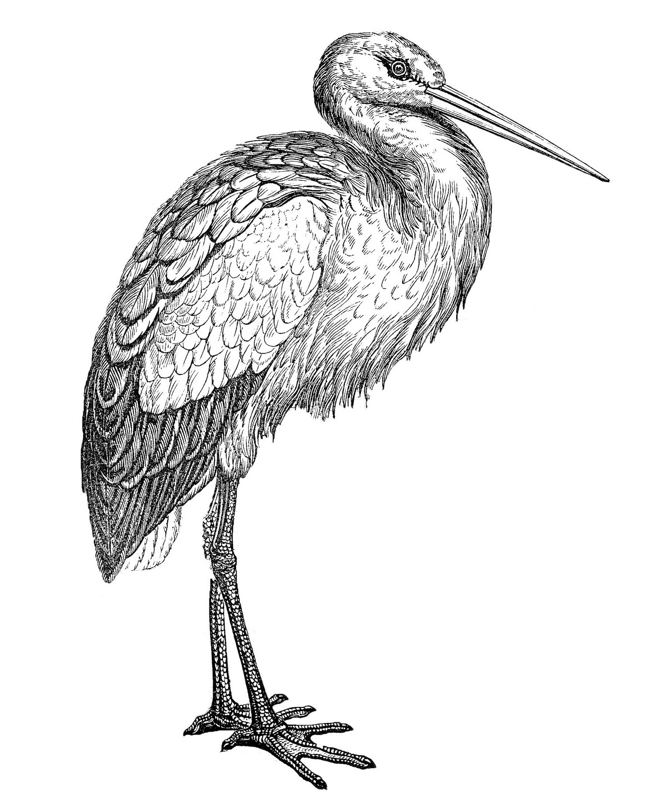 Free Stork Image Download Free Clip Art Free Clip Art On Clipart Library